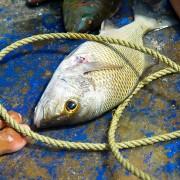 Fish-in-Boat-Loma-Atravesada---Montecristi